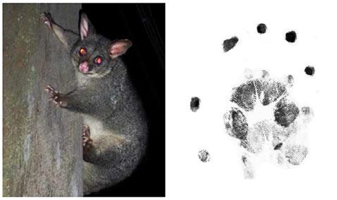 Possum Tracks